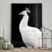 DecoKing - Plakat ścienny – Peacock